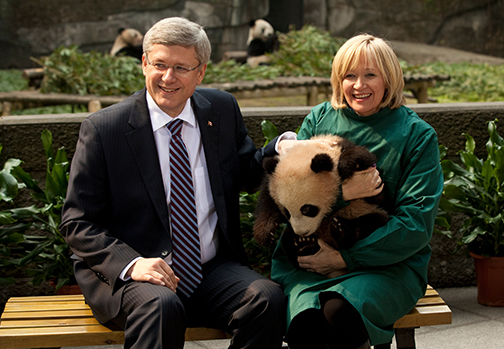 Prime Minister Stephen Harper and Laureen Harper politick with a baby panda. (Photo courtesy PMO)