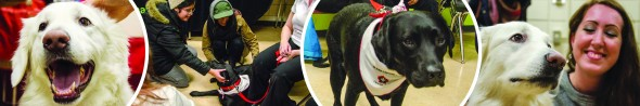 A collage of St. John's Ambulance therapy dogs interacting with people.