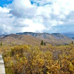 Tombstone Territorial Park: Where trees meet tundra